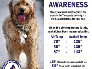 Hot Asphalt Awareness