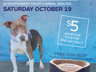 Discover the love of a new best friend this Saturday, October 19! $5 Adoptions!