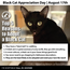 Top 5 Reasons to Adopt a Black Cat