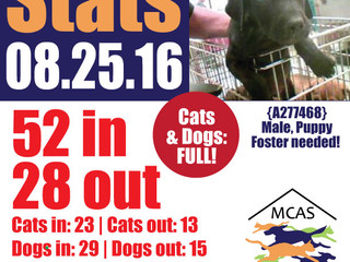 MCAS Intakes & Daily Stats - 08.25.16 - 52 pets in, 28 pets out