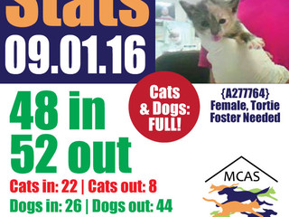 MCAS Intakes & Daily Stats - 09.01.16 - 48 pets in, 52 pets out