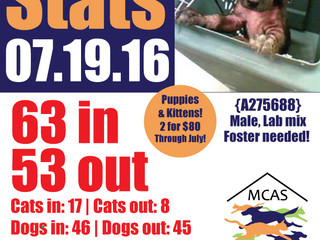 MCAS Intakes & Daily Stats - 07.19.16 - 63 pets in, 53 pets out