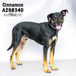 Cinnamon, ID: A298340