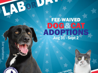 Happy LABor Day Weekend! Fee-Waived Adoptions Are Here!