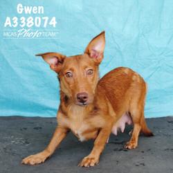 Gwen, ID: A338074
