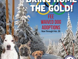 Fee-Waived Dog Adoptions Through Feb. 28!