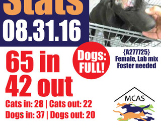 MCAS Intakes & Daily Stats - 08.31.16 - 65 pets in, 42 pets out