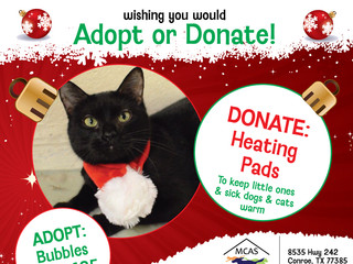 12 Pet Wishes of Christmas! DAY 4: Our homeless pets are wishing you would adopt or donate this holi