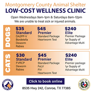 Wellness - Square-01.png