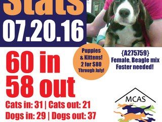 MCAS Intakes & Daily Stats - 07.20.16 - 60 pets in, 58 pets out