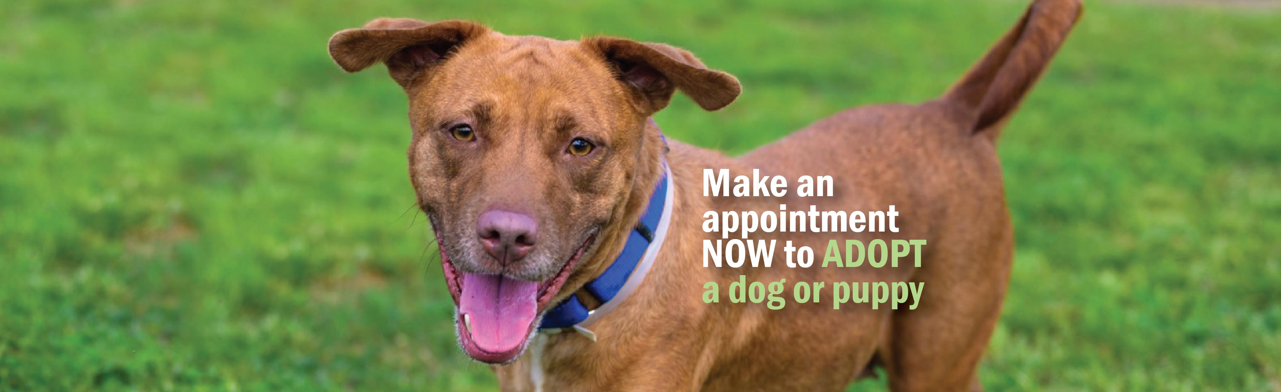 Header-Adopt a Dog-01
