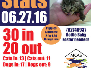 MCAS Intakes & Daily Stats - 06.27.16 - 30 pets in, 20 pets out