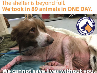 The shelter is FULL. The animals need YOU.