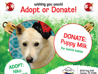 12 Pet Wishes of Christmas! DAY 11: Our homeless pets are wishing you would adopt or donate this hol