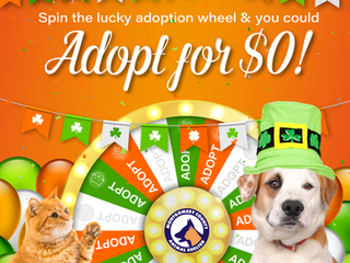 Change a homeless pet's luck... adopt!