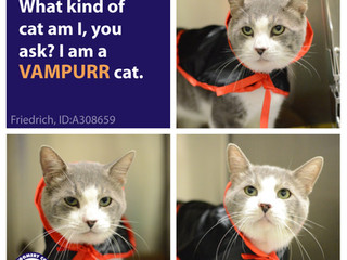 MCAS Cats in Costume - Funny Felines