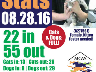 MCAS Intakes & Daily Stats - 08.28.16 - 22 pets in, 55 pets out