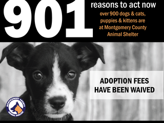 Adoption fees are waived as the shelter population hovers at over 900 pets