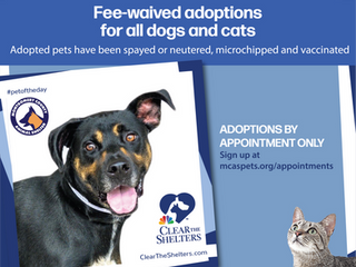 Clear the Shelters - All August Long!