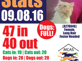 MCAS Intakes & Daily Stats - 09.08.16 - 47 pets in, 40 pets out