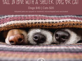 Fall in Love with a Shelter Dog or Cat!