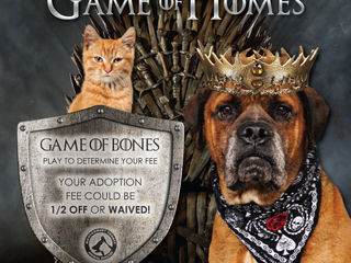 The battle for a home is on! Visit MCAS for Game of Homes!