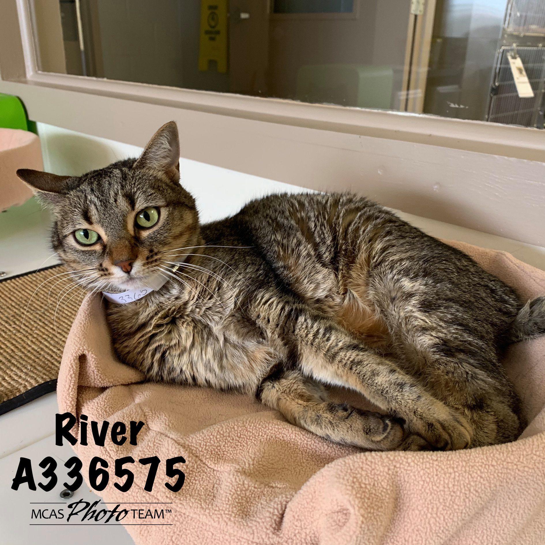 River, ID: A336575