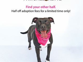 The Pawchelorette! Adopt your other half for half off!