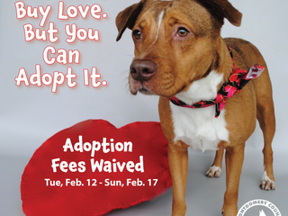 You can't buy love - but you can adopt it!