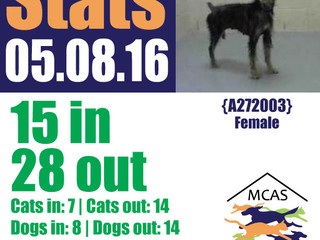 MCAS Intakes & Daily Stats - 05.08.16 - 15 pets in, 28 pets out