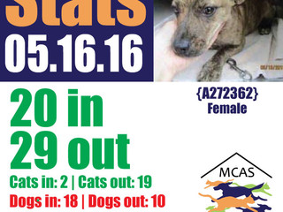 MCAS Intakes & Daily Stats - 05.16.16 - 20 pets in, 29 pets out