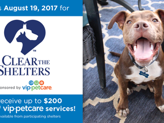 The Montgomery County Animal Shelter teams up with Telemundo Houston/KTMD to host third annual pet a