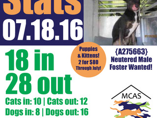 MCAS Intakes & Daily Stats - 07.18.16 - 18 pets in, 28 pets out