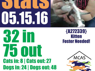 MCAS Intakes & Daily Stats - 05.15.16 - 32 pets in, 75 pets out