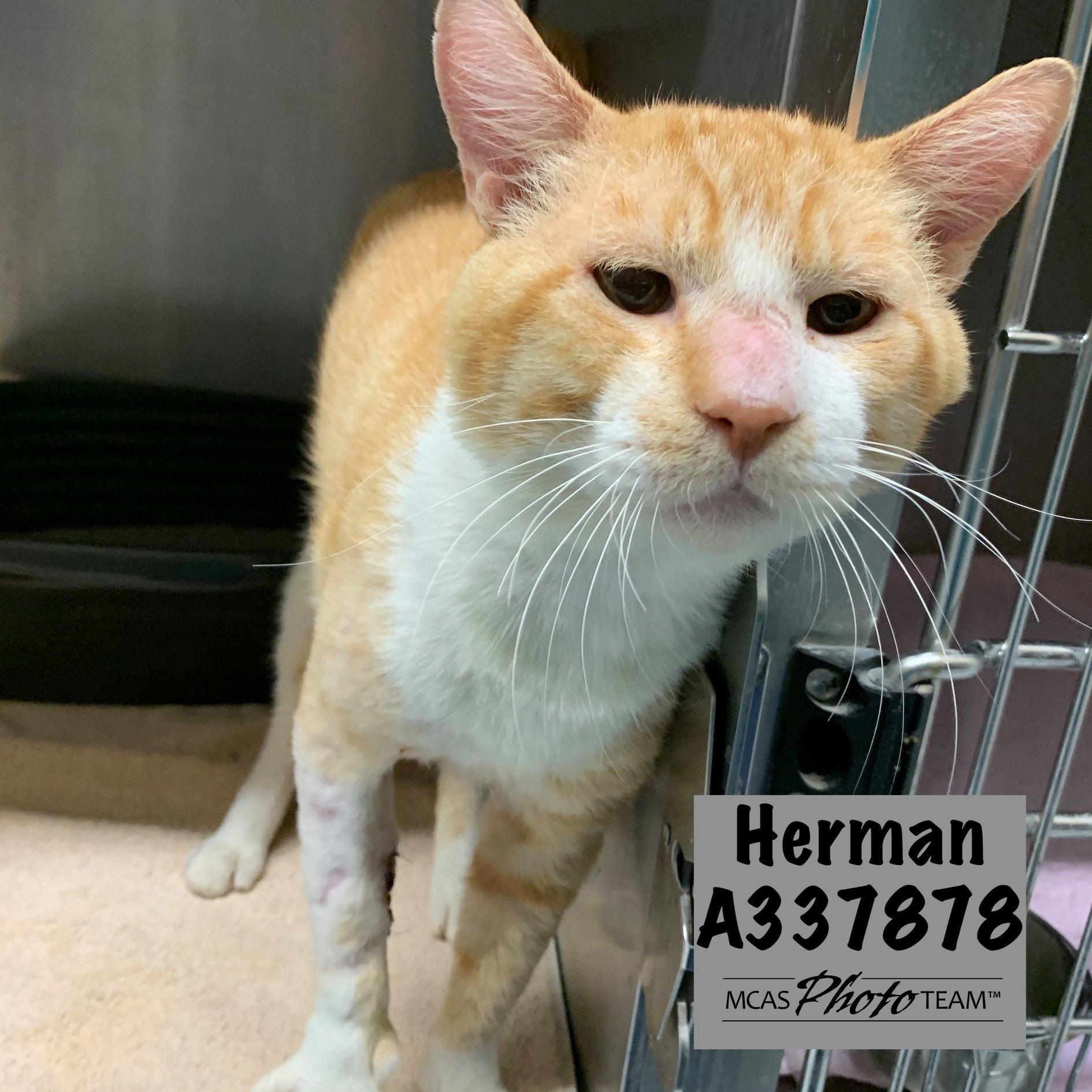 Herman, ID: A337878