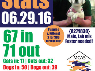 MCAS Intakes & Daily Stats - 06.29.16 - 67 pets in, 71 pets out