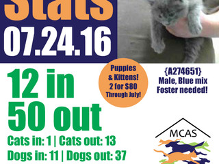 MCAS Intakes & Daily Stats - 07.24.16 - 12 pets in, 50 pets out
