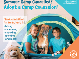 Summer Camp cancelled? Adopt a Camp Counselor!