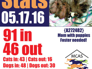 MCAS Intakes & Daily Stats - 05.17.16 - 91 pets in, 46 pets out
