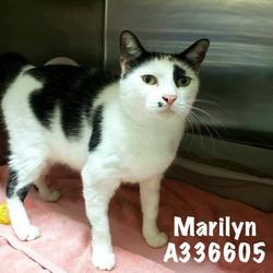 Marilyn, ID: A336605