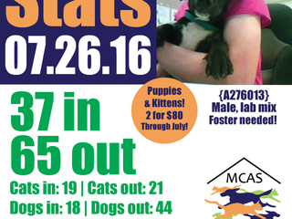 MCAS Intakes & Daily Stats - 07.26.16 - 37 pets in, 65 pets out