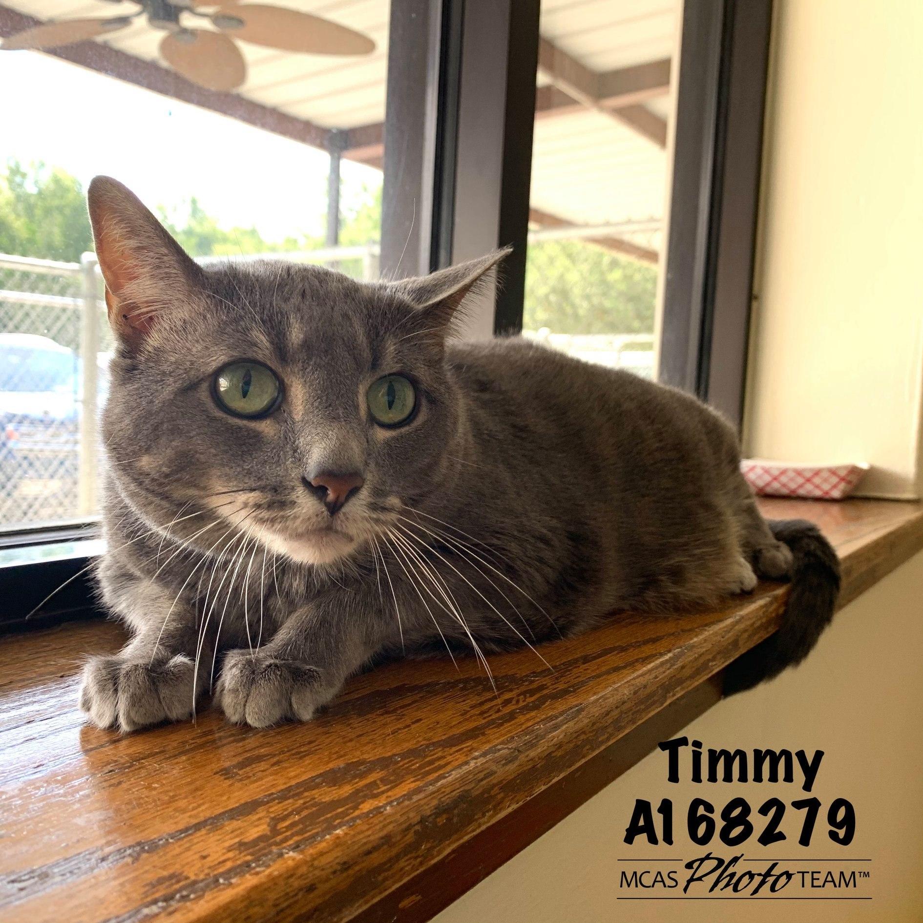 Timmy, ID: A168279