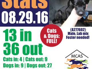 MCAS Intakes & Daily Stats - 08.29.16 - 13 pets in, 36 pets out