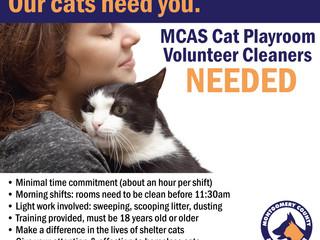 MCAS Cat Playroom Volunteer Cleaners NEEDED!