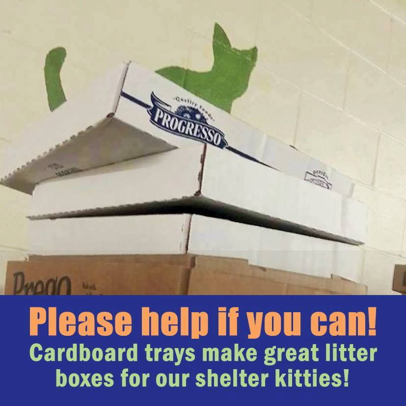 Our kitties need carboard trays for litter boxes. Please bring some!