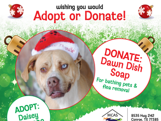 12 Pet Wishes of Christmas! DAY 5: Our homeless pets are wishing you would adopt or donate this holi