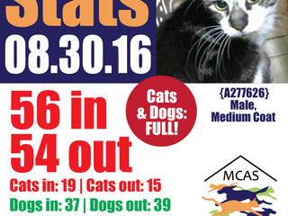 MCAS Intakes & Daily Stats - 08.30.16 - 56 pets in, 54 pets out