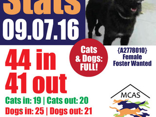 MCAS Intakes & Daily Stats - 09.07.16 - 44 pets in, 41 pets out