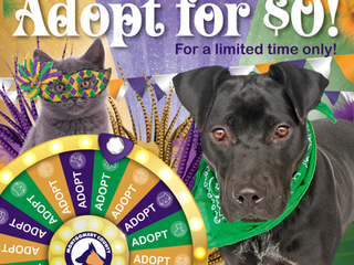 Celebrate Mardi Paws and you could adopt for $0!