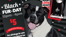 Adopt 'til you drop this Black Fur-Day!